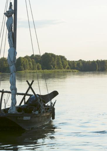 Anjou Coteaux de la Loire, un vin blanc fin et gourmand
