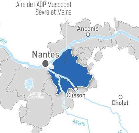 Aoc Muscadet Sèvre Et Maine White Wine Loire Valley Wine