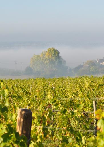 quart de chaume grand cru vins du val de loire