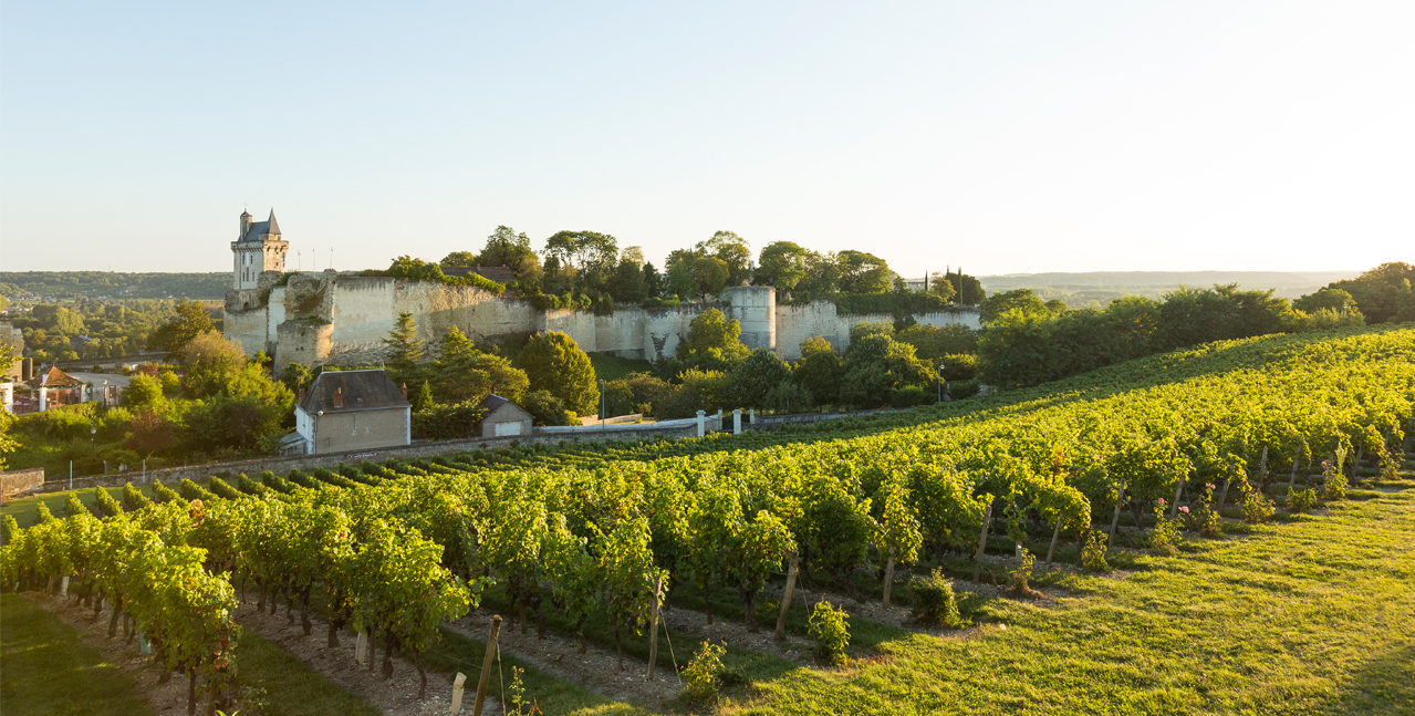 Un château surplombant un vignoble sur la route du val de Loire