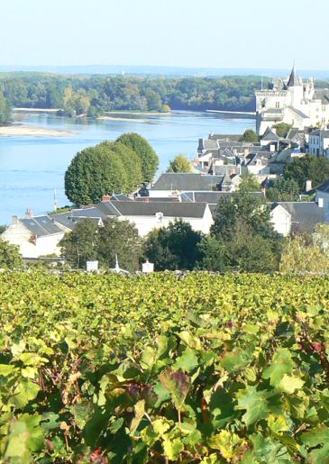 AOC saumur-champigny - red wine - Loire Valley Wine | Loire