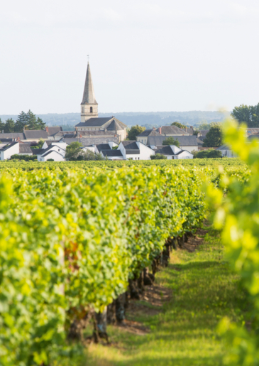 Poster of Saint-Nicolas-de-Bourgueil, a smooth and fruity wine