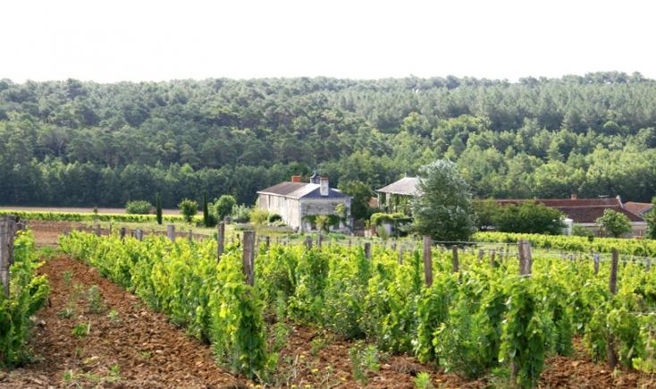 domaine de la Garreliere vin bio