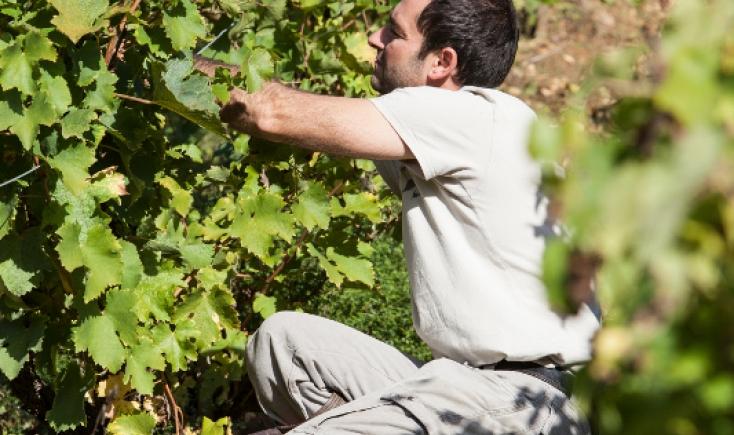 Comment Constituer Une Carte Des Vin Restaurant
