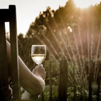 Calme sur la vigne