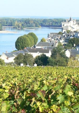 vin val de loire saumur champigny